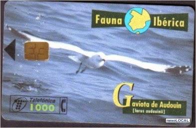 Tarjeta telefónica Gaviota de Audouin (Larus audouinii)