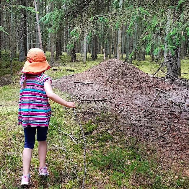 Unsere 11 besten Ausflugstipps für die Ostseeküste Nordjütlands. Unsere Kinder haben bei diesem Ausflug durch den Wald zum Strand viel entdeckt, z.B. einen Ameisenhügel.