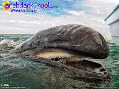 Hewan yang Memiliki Gigi Luar Biasa
