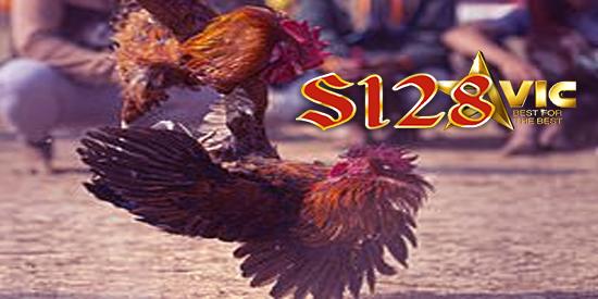 s128 aduan ayam