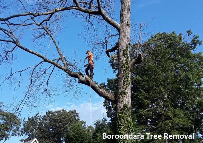 Boroondara Tree Removal