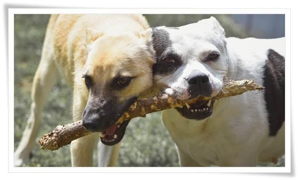 dog aggression training