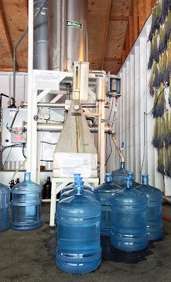 Multi-Use Organic Lavender Hydrosol fresh from the still