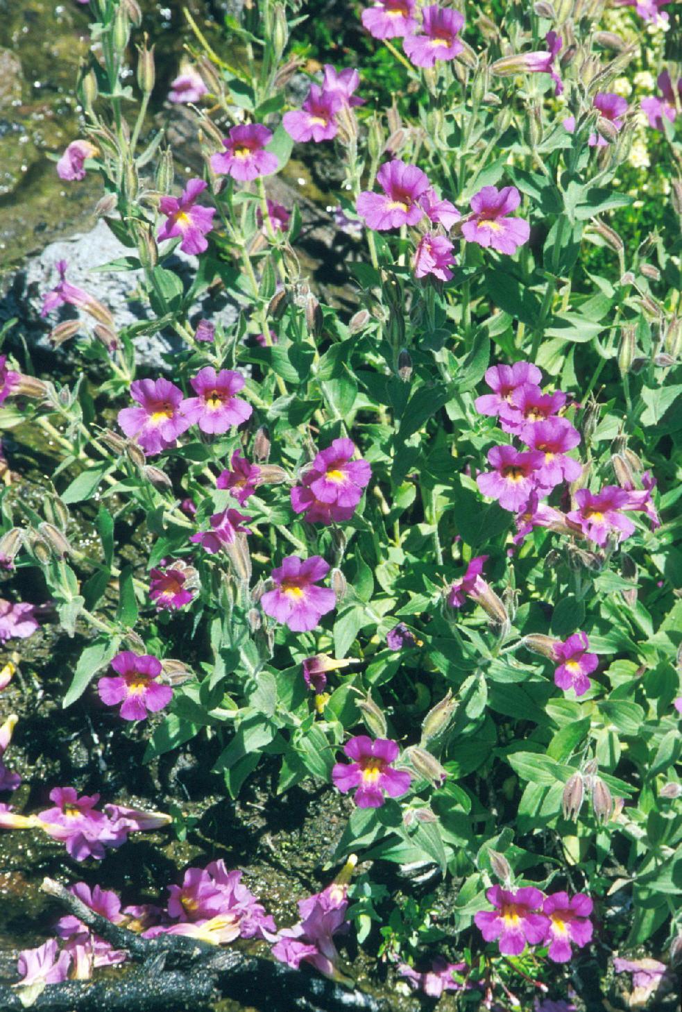 I Brake For Wildflowers Oregon Excursion