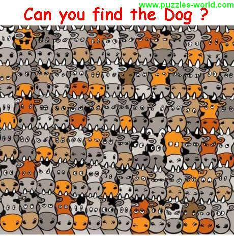 Can you find the Dog ?