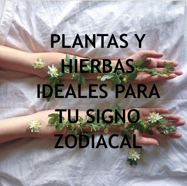 Conoce la planta ideal para cada signo zodiacal, con el fin de sanar.