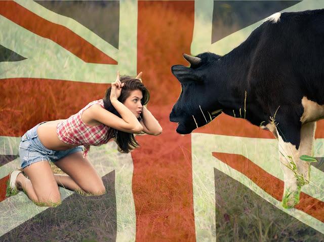 British cows got collars 5G