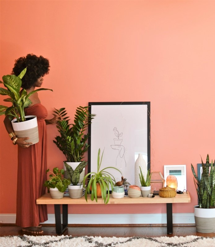 5 Easy to Care for Plants With Plant Care Tips- design addict mom