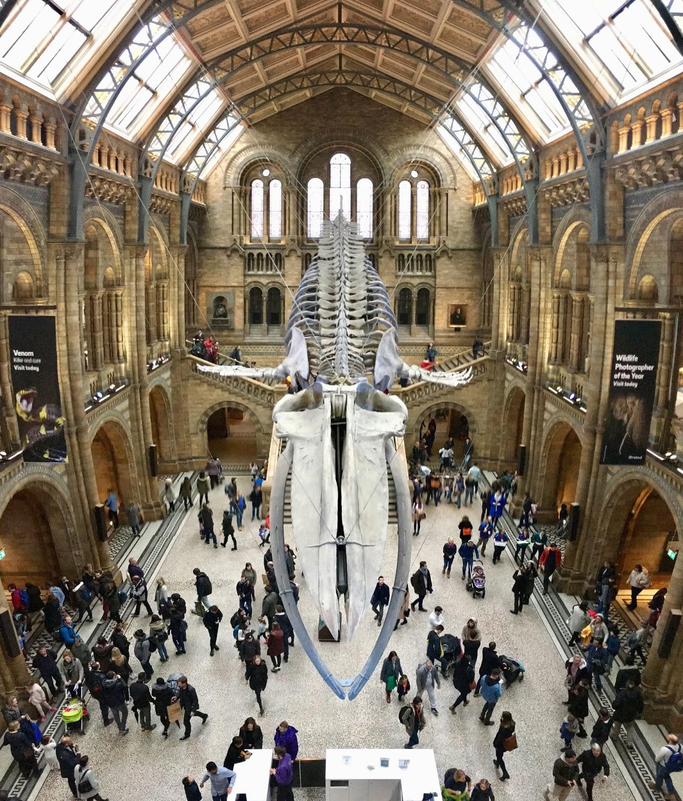 London Natural History Museum Naturkundemuseum Eingangshalle