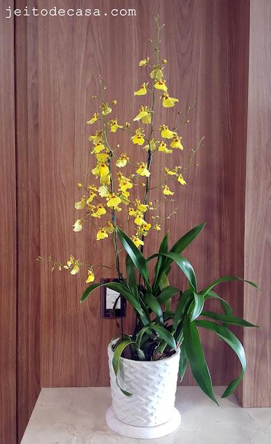 oncidium-orchis