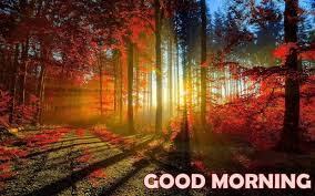 good morning nature images forest