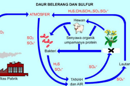 Berikut adalah gambar siklus sulfur!  Peran bagian yang bertanda X dalam daur tersebut adalah ....