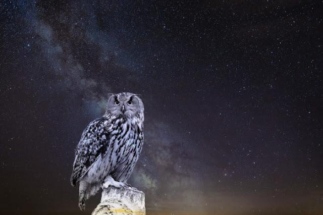Cú đêm loài vật kỳ lạ mang tới điềm báo tâm linh gì?
