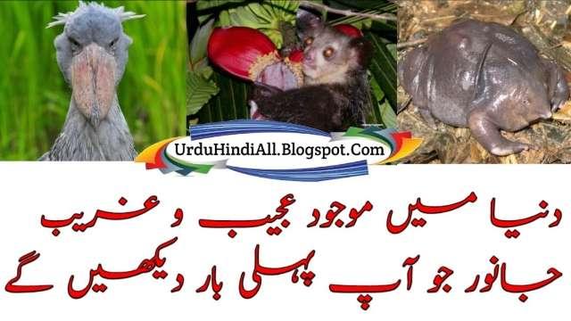 ajeeb-o-ghareeb-janwar-animals-urdu-hindi-animal-facts-maloomat