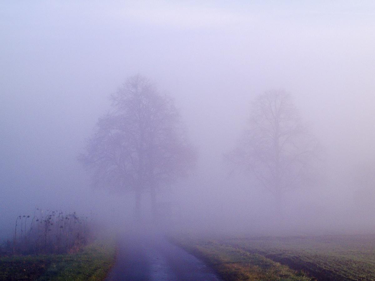 #259 Color-Minotar f2.8 35mm – Bäume aus dem Nebel