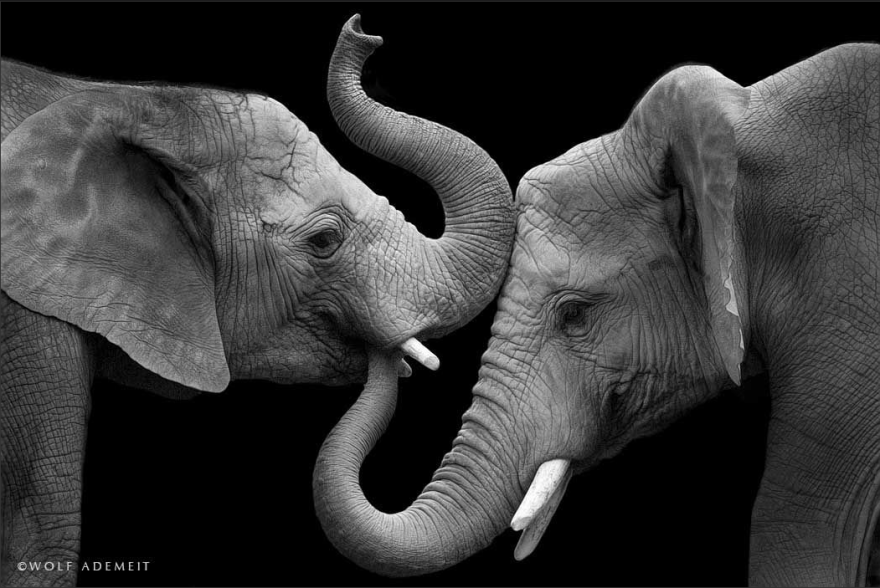 omorfos-kosmos.gr - Φωτογράφος δείχνει τη συναισθηματική πλευρά των ελεφάντων
