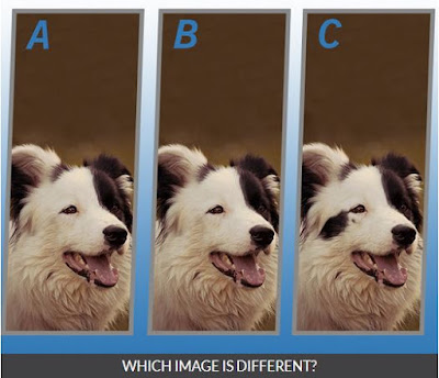 Quiz Diva Spot the Different Dog Quiz Image8