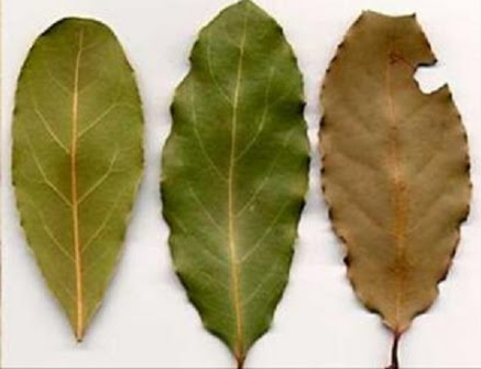 Want Your House 100% Cockroach-Free? Just Use These Leaves From An Amazing Plant And See The Results For Yourself!
