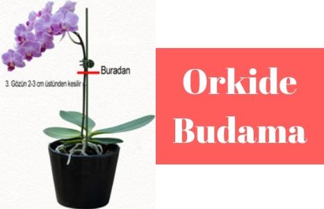 Orkide bakımı için orkide budama yapılması