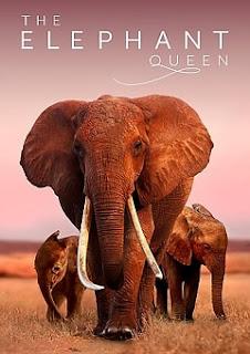 The Elephant Queen 2019