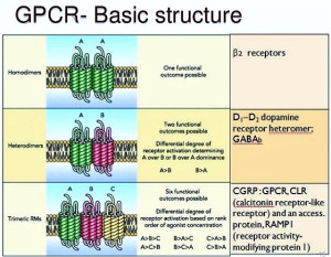 Drug discovery for GPCR signalling made easy by IIT Kanpur