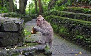 Rekomendasi Tempat Wisata Di Ubud Bali Yang Menakjubkan