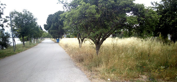 Καταγγελία αναγνώστη για την μη κοπή ξερών χόρτων από τον Δήμο Στυλίδας