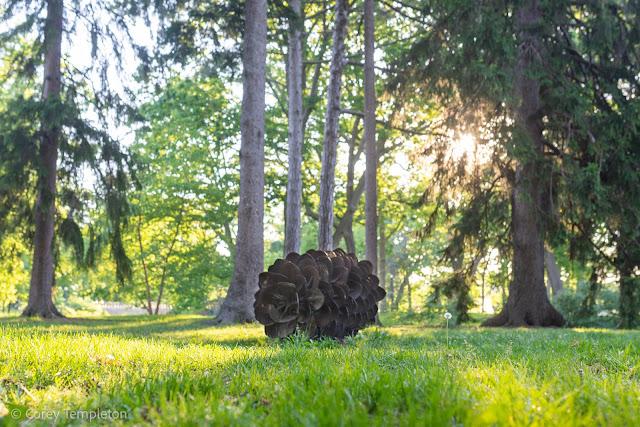 Portland, Maine USA Photo by Corey Templeton June 2021 Pinecone in Deering Oaks by Patrick Plourde