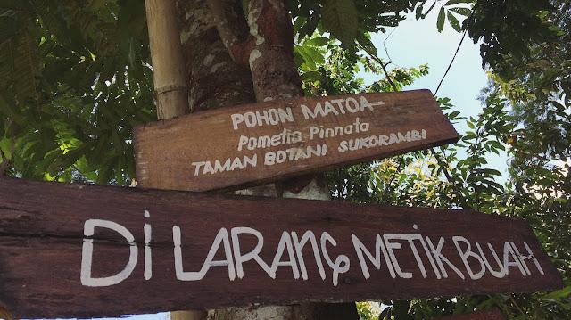 Dilarang memetik buah di Taman Botani Sukorambi