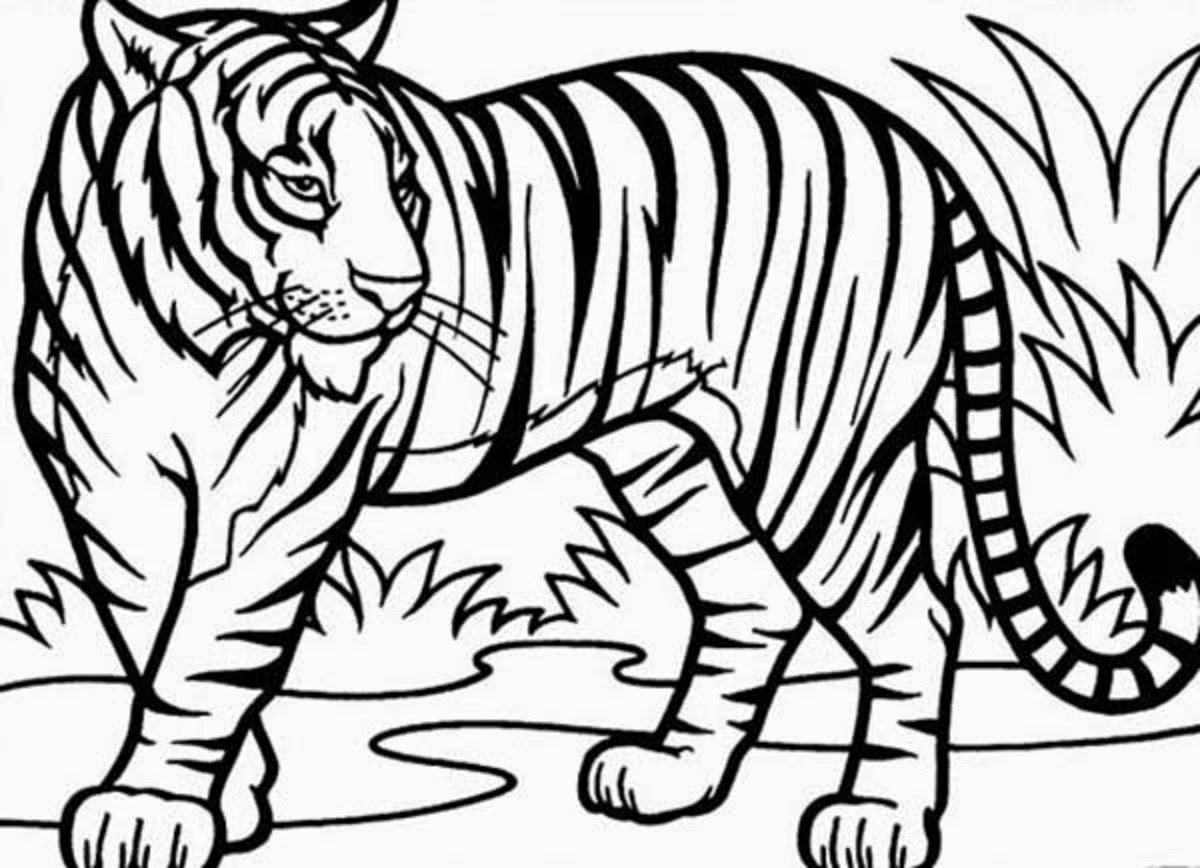 Drawing Pencil Of Tiger Coloring Pages