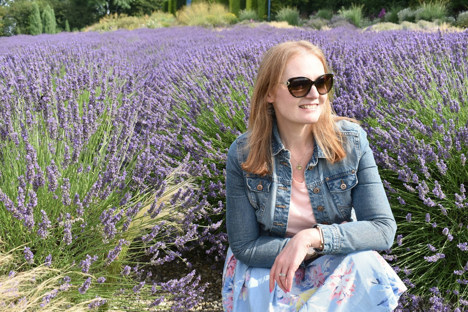 Lavender Fields in the North of England - A Trip to Yorkshire Lavender