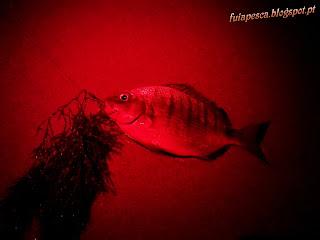 0499 - Uns peixes por ai