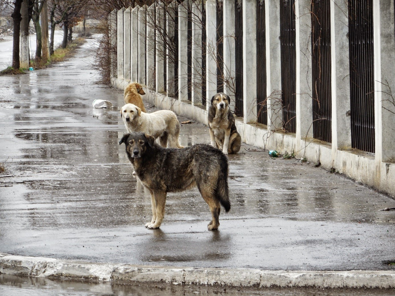 Hungary Rescue Dogs
