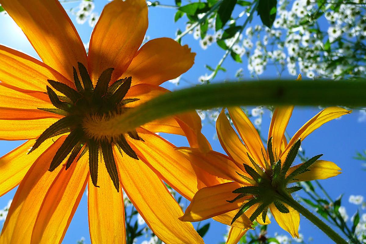 Memaksimalkan Komposisi Foto Landscape bunga indha Eworm eye dan Mata Cacing