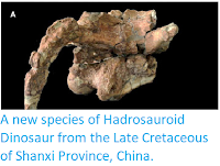 https://sciencythoughts.blogspot.com/2013/10/a-new-species-of-hadrosauroid-dinosaur.html