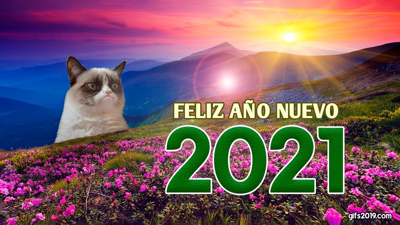 gato feliz año nuevo 2021