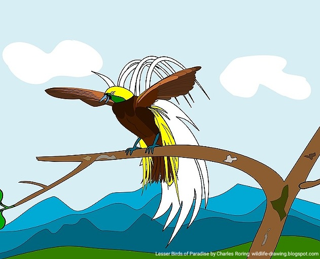 Digital art of Bird of Paradise created by Charles Roring