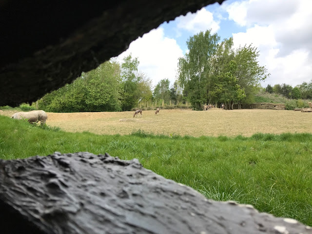 Looking through a hole in the hideout into a field. The rear of rhino is visible and some antelope like creatures