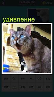 сидит кошка открыв свою пасть от удивления с круглыми глазами 22 уровень