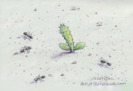 Prickly pear cactus seedling