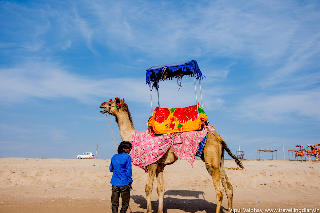 Camel ride at Madhavpur Beach
