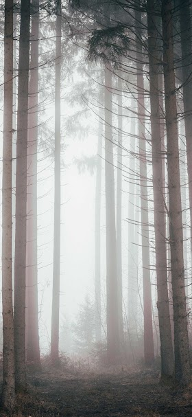 Trees in forest wallpaper