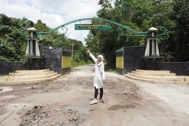 Pusat Konservasi Gajah Way Kambas, Lampung Timur