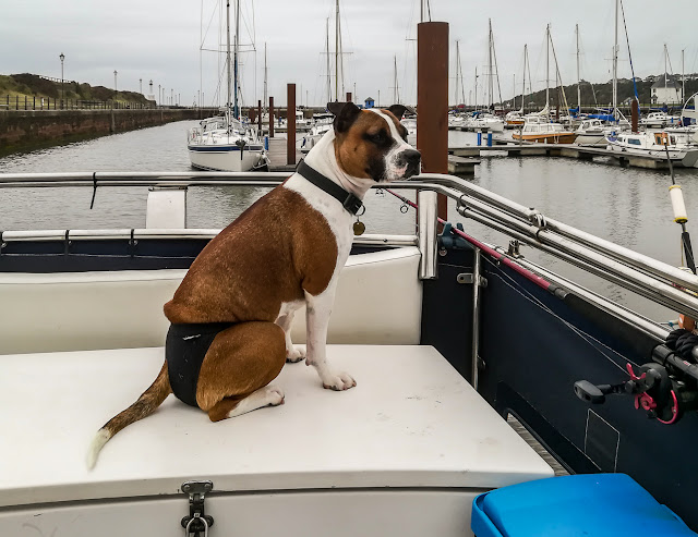 Photo of Ruby sitting on one of the lockers on Ravensdale's aft deck