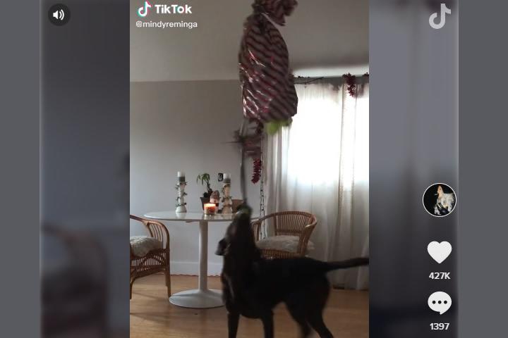 La familia sorprende al perro con una piñata llena de sus cosas favoritas