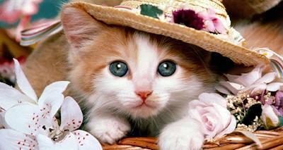 اسماء قطط 2018 جديدة و معانيها اجمل الاسماء للقطط كيوت