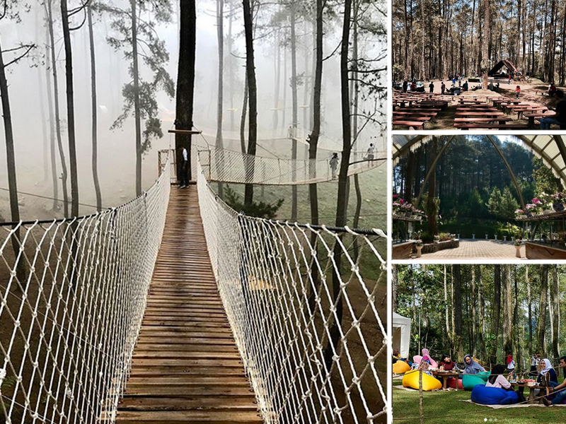 Orchid Forest Cikole Tempat Asyik Wisata Alam Di Lembang