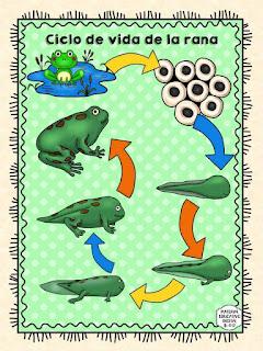 fichas-ciclos-vida-imprimir