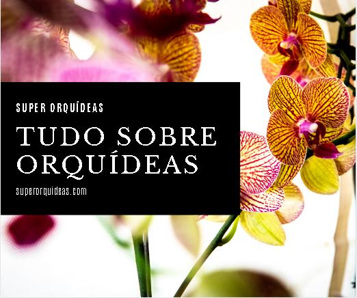 Tudo sobre orquídeas