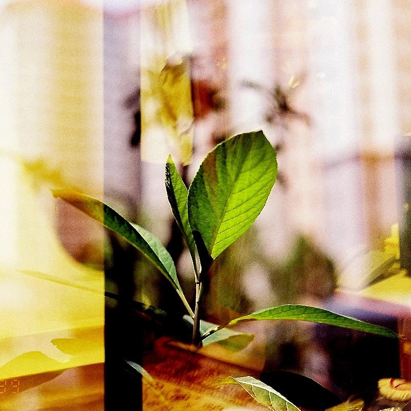 A Garden Ensemble, AF Nikkor 50mm F1.8 D 03